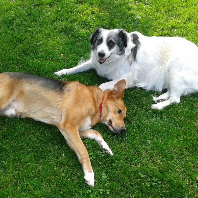 Paula & Balu - Hunde im Glück