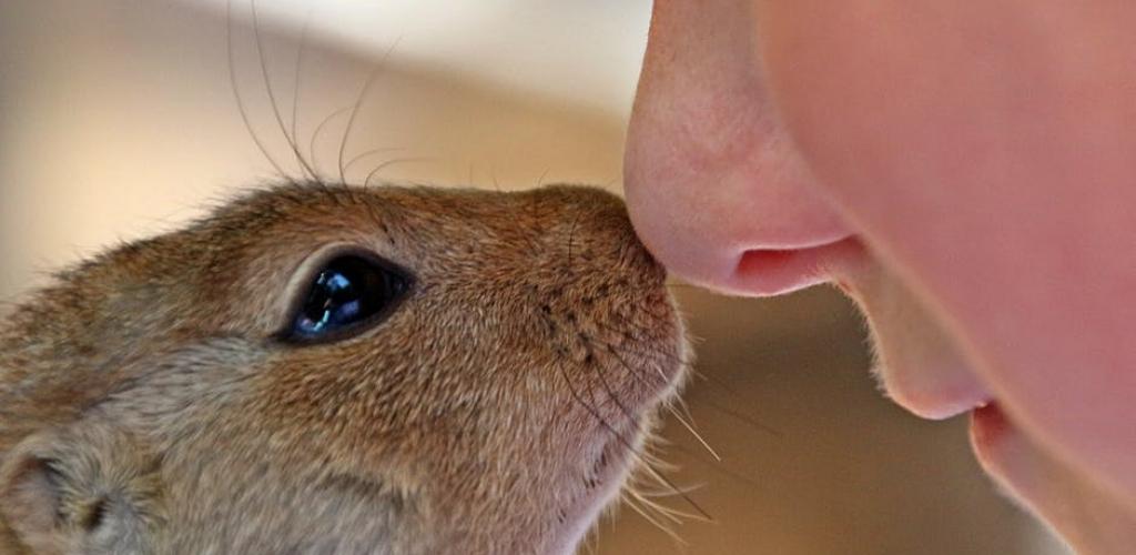 Eichhörnchen © Pixabay via Pexels